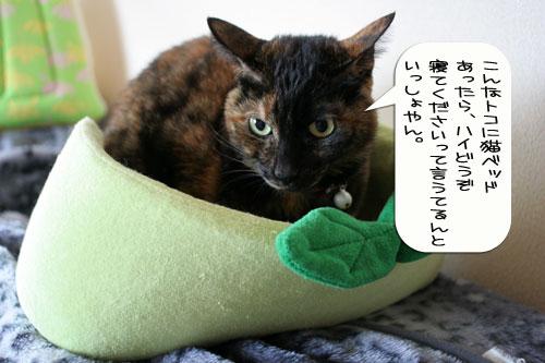 猫とお線香の関係&幸せ報告_d0355333_16364589.jpg
