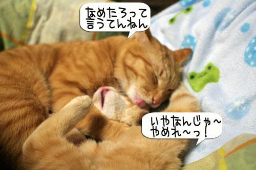 猫とお線香の関係&幸せ報告_d0355333_16364653.jpg