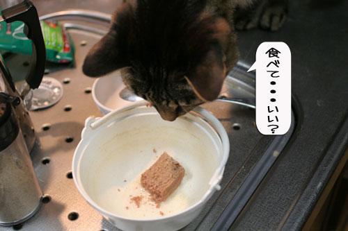 にゃんずご飯と男の料理_d0355333_16364712.jpg
