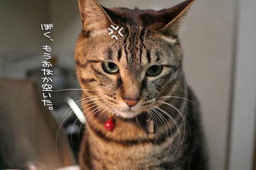 にゃんずご飯と男の料理_d0355333_16364828.jpg