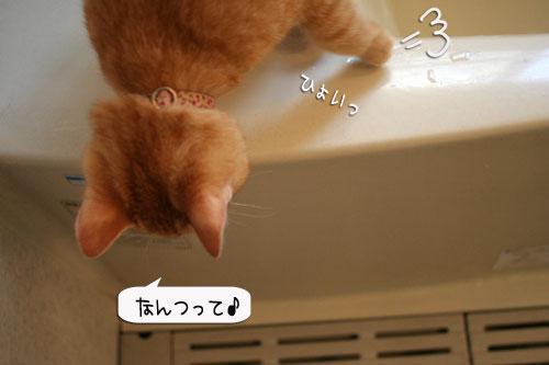 芸猫人生を突き進む_d0355333_16365923.jpg