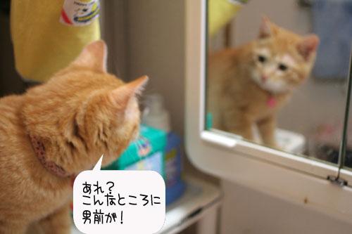 芸猫人生を突き進む_d0355333_16370032.jpg