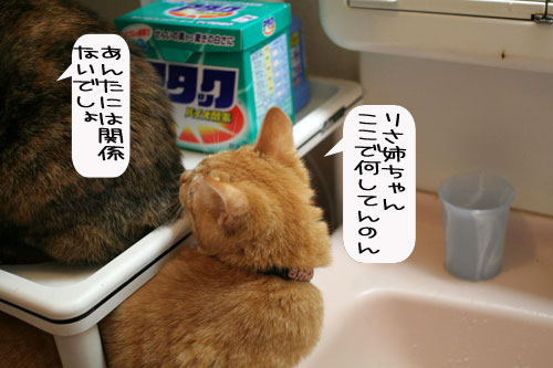 芸猫人生を突き進む_d0355333_16370080.jpg