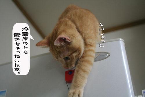 芸猫人生を突き進む_d0355333_16370088.jpg