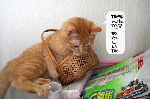 芸猫人生を突き進む_d0355333_16370112.jpg