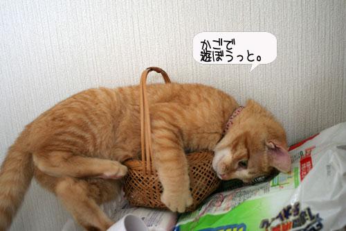 芸猫人生を突き進む_d0355333_16370128.jpg