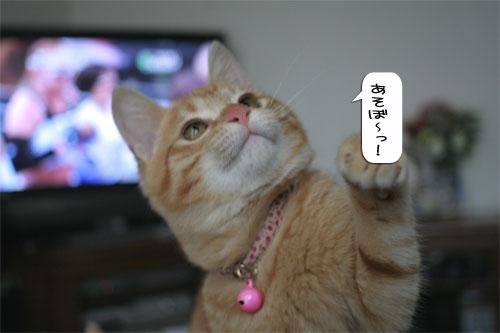 大阪国際女子マラソン見ながら、飛ぶ猫チャレンジ_d0355333_16370206.jpg