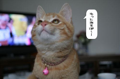 大阪国際女子マラソン見ながら、飛ぶ猫チャレンジ_d0355333_16370213.jpg