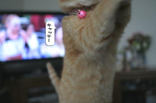 大阪国際女子マラソン見ながら、飛ぶ猫チャレンジ_d0355333_16370235.jpg