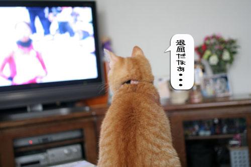 大阪国際女子マラソン見ながら、飛ぶ猫チャレンジ_d0355333_16370243.jpg