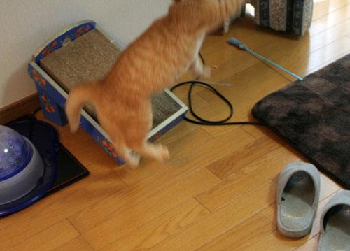 大阪国際女子マラソン見ながら、飛ぶ猫チャレンジ_d0355333_16370325.jpg