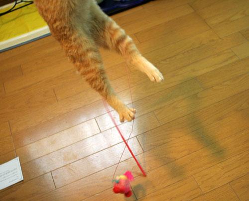 大阪国際女子マラソン見ながら、飛ぶ猫チャレンジ_d0355333_16370369.jpg
