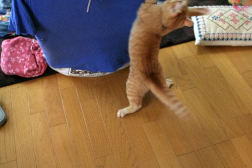 大阪国際女子マラソン見ながら、飛ぶ猫チャレンジ_d0355333_16370377.jpg