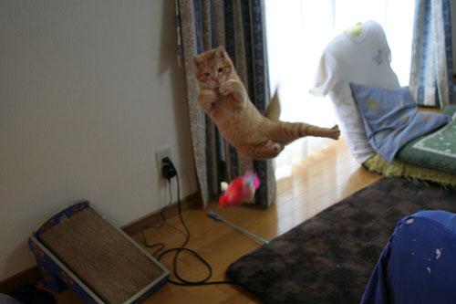 大阪国際女子マラソン見ながら、飛ぶ猫チャレンジ_d0355333_16370451.jpg