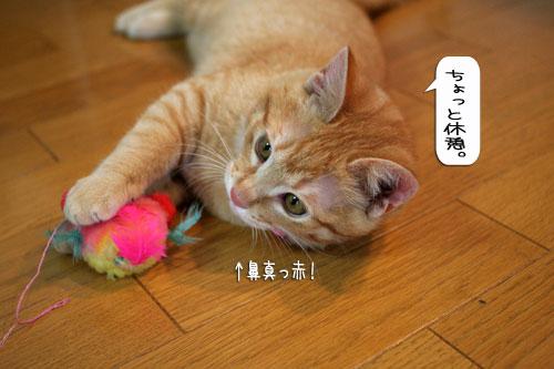 大阪国際女子マラソン見ながら、飛ぶ猫チャレンジ_d0355333_16370483.jpg