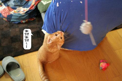 大阪国際女子マラソン見ながら、飛ぶ猫チャレンジ_d0355333_16370516.jpg