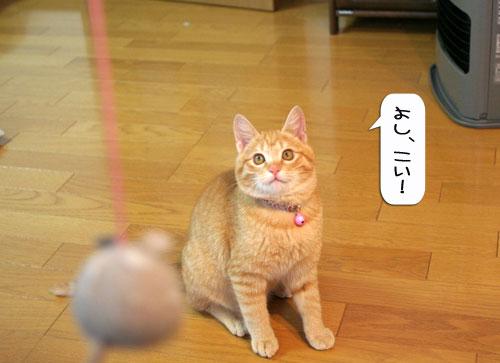 大阪国際女子マラソン見ながら、飛ぶ猫チャレンジ_d0355333_16370550.jpg
