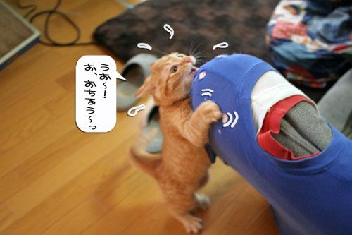 大阪国際女子マラソン見ながら、飛ぶ猫チャレンジ_d0355333_16370604.jpg