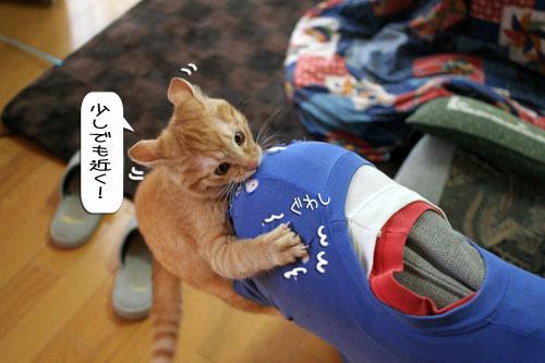 大阪国際女子マラソン見ながら、飛ぶ猫チャレンジ_d0355333_16370623.jpg