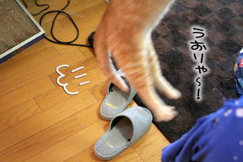 大阪国際女子マラソン見ながら、飛ぶ猫チャレンジ_d0355333_16370694.jpg