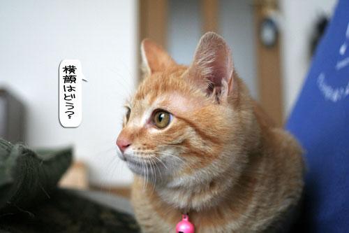 活発子猫とおっとりスコ猫_d0355333_16371607.jpg