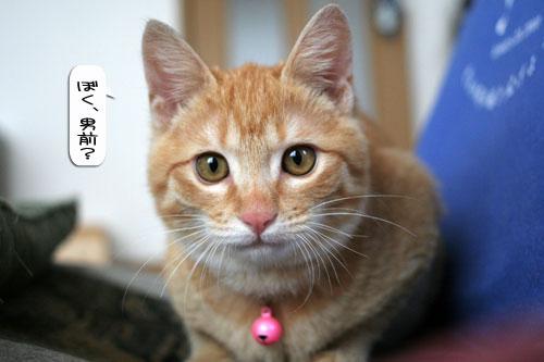 活発子猫とおっとりスコ猫_d0355333_16371664.jpg