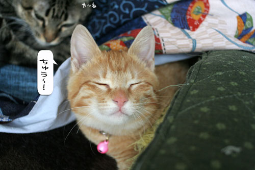 活発子猫とおっとりスコ猫_d0355333_16371687.jpg