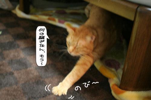 祝★特別賞受賞_d0355333_16372153.jpg