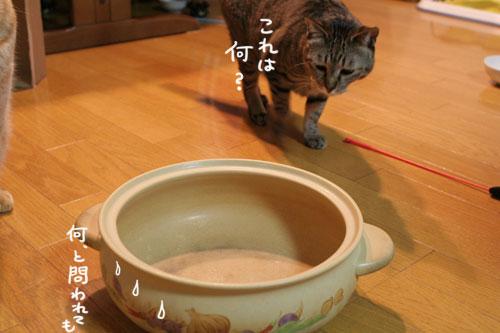 オツトカレー de ねこ鍋_d0355333_16372651.jpg