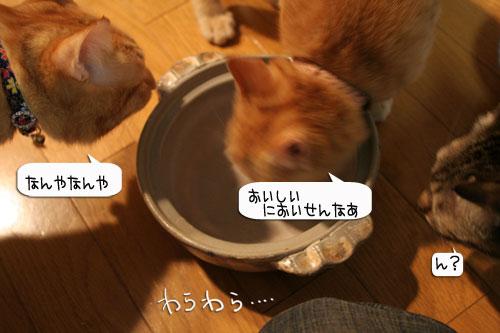 オツトカレー de ねこ鍋_d0355333_16372712.jpg