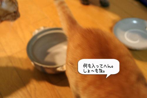 オツトカレー de ねこ鍋_d0355333_16372714.jpg