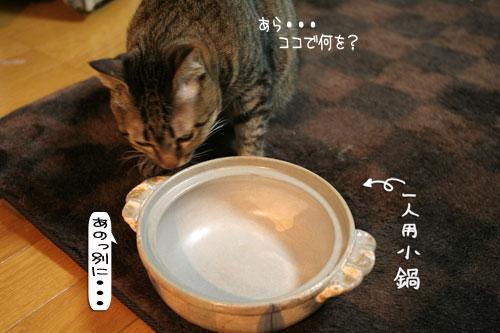オツトカレー de ねこ鍋_d0355333_16372856.jpg