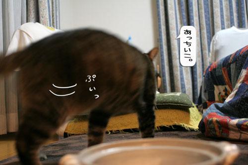 オツトカレー de ねこ鍋_d0355333_16372910.jpg