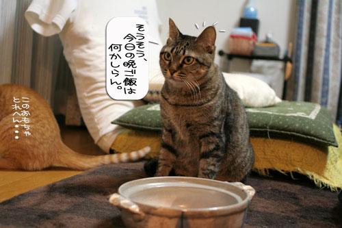 オツトカレー de ねこ鍋_d0355333_16372935.jpg