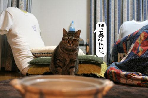 オツトカレー de ねこ鍋_d0355333_16372984.jpg