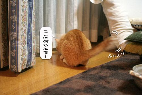オツトカレー de ねこ鍋_d0355333_16373041.jpg
