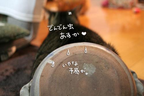 オツトカレー de ねこ鍋_d0355333_16373171.jpg