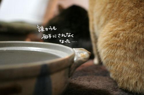 オツトカレー de ねこ鍋_d0355333_16373187.jpg