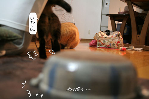 オツトカレー de ねこ鍋_d0355333_16373261.jpg