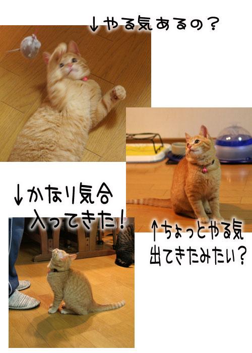 オツトカレー de ねこ鍋_d0355333_16373489.jpg