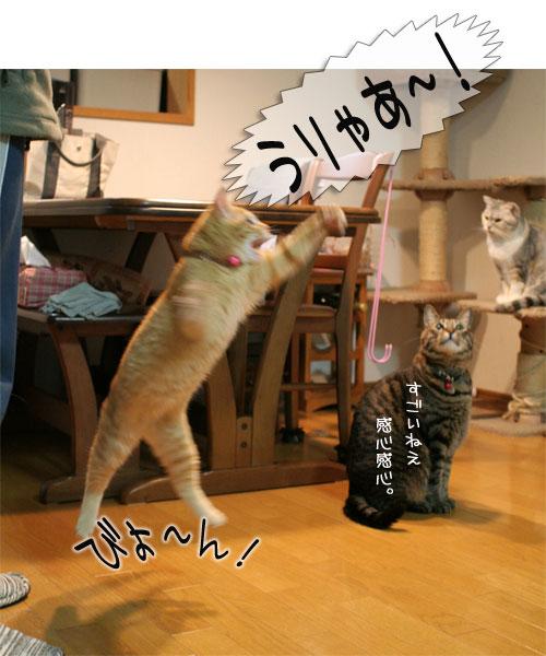 オツトカレー de ねこ鍋_d0355333_16373504.jpg