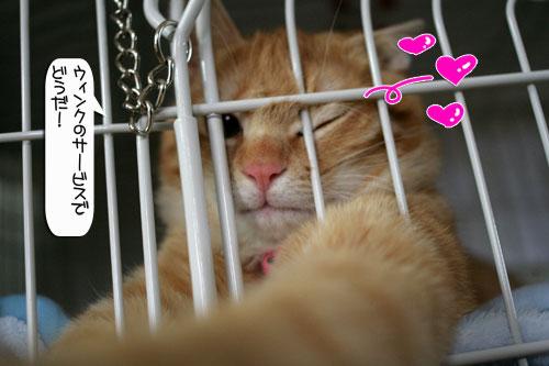 「ネコを撮る」_d0355333_16380330.jpg