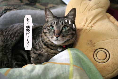 「ネコを撮る」_d0355333_16380569.jpg