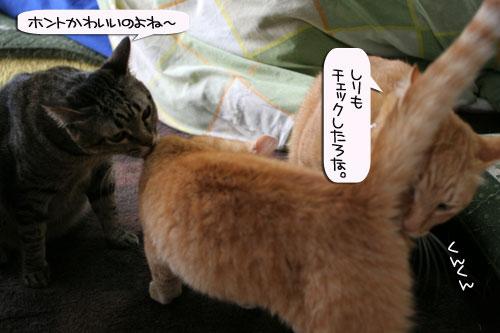 「ネコを撮る」_d0355333_16380575.jpg