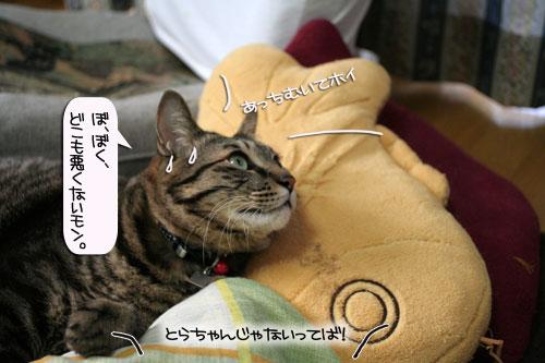 「ネコを撮る」_d0355333_16380670.jpg