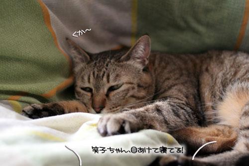 「ネコを撮る」_d0355333_16380687.jpg