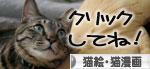 「ネコを撮る」_d0355333_16380703.jpg