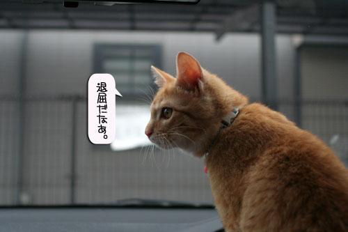 「ネコを撮る」_d0355333_16380815.jpg