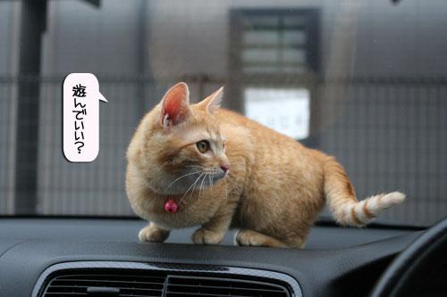 「ネコを撮る」_d0355333_16380893.jpg
