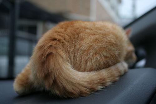 「ネコを撮る」_d0355333_16381013.jpg